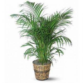 Bitki Kiralama