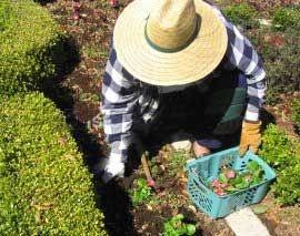 Bahçe Bakım Hizmeti
